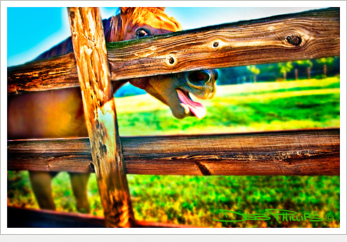 Horse foolin' around on a farm in Lewisville, North Carolina (Forsyth County). Deb Phillips, photographer.