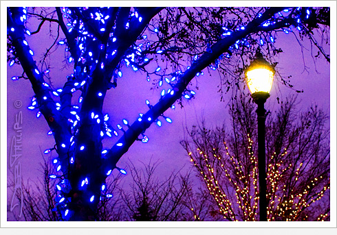 Shallowford Square Trees with Christmas Lights in Lewisville, North Carolina (Forsyth County) - Deb Phillips, photographer.