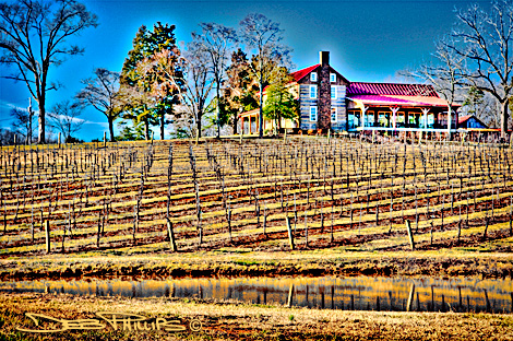 View of Westbend Vineyards on a clear winter day (Lewisville, North Carolina - Forsyth County). Deb Phillips, photographer.