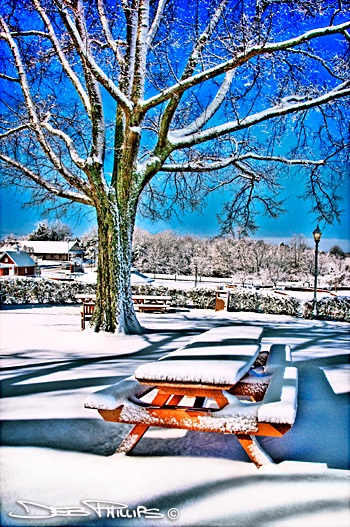A beautiful snow at Shallowford Square in Lewisville, NC (Forsyth County). Deb Phillips, photographer.
