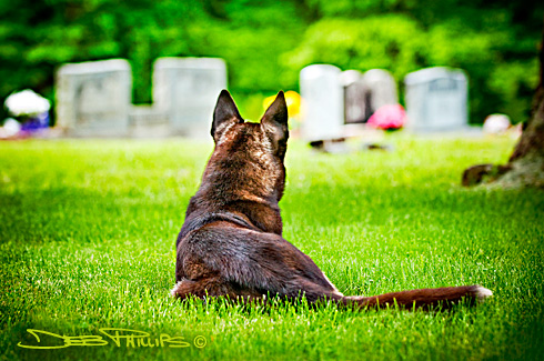 A solitary German shepherd rests for a few moments in the peaceful surroundings of the Double Springs AME Zion Church graveyard in Lewisville, North Carolina. Deb Phillips, photographer.